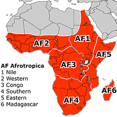 Afrotropical Subregions