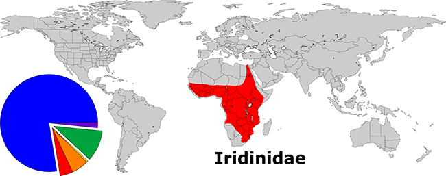 Global Diversity of the Iridinidae. The red wedge of the pie represents the relative species diversity of the family (43 of 842).