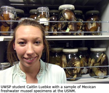 UWSP student Caitlin Luebke with a sample of Mexican freshwater mussel specimens at the USNM.