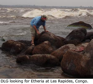 Daniel Graf looking for Etheria at Les Rapides, Congo.