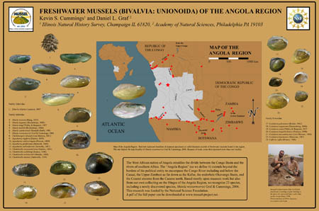 Freshwater mussels (Bivalvia: Unionoida) of the Angola Region