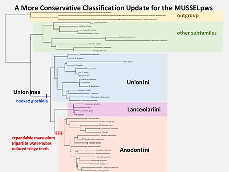 A more conservative classification update for the MUSSELpws