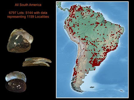 This slide depicts patterns of freshwater mussel species richness and endemism in northern South America.