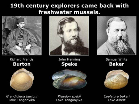This slide shows just three of the freshwater mussels named for famous explorers of Africa.